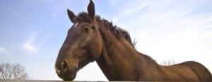 campamento-de-frances-y-equitacion_page2_image3